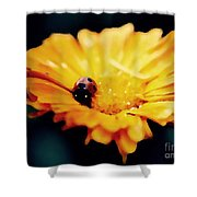 Lady Bug Walking The Line Shower Curtain