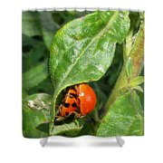 Lady Bugs Shower Curtain