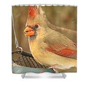 Lady Cardinal  Shower Curtain