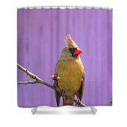 Rare Yellow Cardinal On A Cherry Branch Shower Curtain