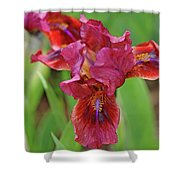 Lady In Red Iris Shower Curtain