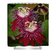 Lady Margaret Passiflora Shower Curtain