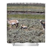 Lady Pronghorn Gathering Shower Curtain