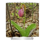 Lady Slipper 2037 Shower Curtain