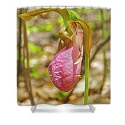 Lady Slipper 2040 Shower Curtain