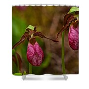 Lady Slipper Close-up  Shower Curtain