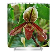Lady Slipper Shower Curtain