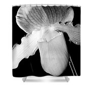 Lady Slipper Orchid Black And White Shower Curtain