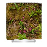 Lady Slippers And Star Flower Shower Curtain