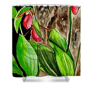 Lady Slippers Shower Curtain