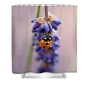 Ladybird On Norfolk Lavender  #norfolk Shower Curtain