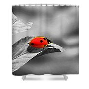 Ladybird Shower Curtain