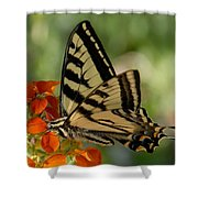 Ladybug And Tigertail Shower Curtain