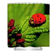 Ladybug Atop A Leaf Shower Curtain