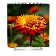 Ladybug Gathering Shower Curtain