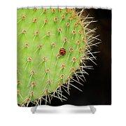 Ladybug On Cactus Shower Curtain