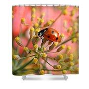 Ladybug On Fennel Shower Curtain