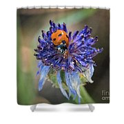 Ladybug On Purple Flower Shower Curtain