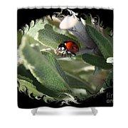 Ladybug On Sage With Swirly Framing Shower Curtain