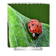 Ladybug With Dew Drops Shower Curtain