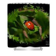 Ladybug With Swirly Framing Shower Curtain