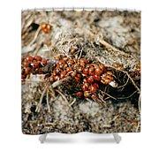 Ladybugs En Masse Shower Curtain