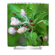 Ladybugs On Apple Blossoms Shower Curtain