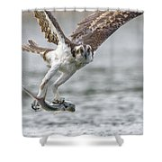 Ladyfish Shower Curtain