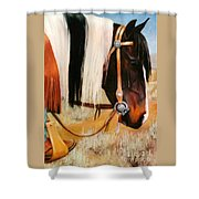 Ladys Jewels Horse Painting Portrait Shower Curtain