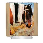 Ladys Jewels Horse Painting Portrait Shower Curtain