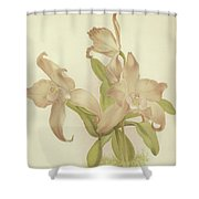 Laelia Autumnalis Venusta Shower Curtain