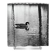 Geese At Evening Light #1 Shower Curtain