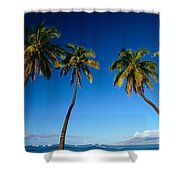 Lahaina, Five Coconut Tre Shower Curtain