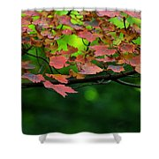 Laid Upon The Branches Shower Curtain