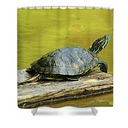 Laidback Turtle Shower Curtain