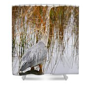 Lake Carmi Visitor Shower Curtain