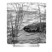 Lake Huron Shoreline 10 Bw Shower Curtain