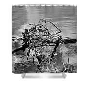 Lake Irene 12-4 Shower Curtain