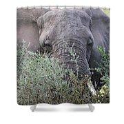 Lake Manyara Elephant Shower Curtain