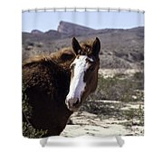 Lake Mead Mustang Shower Curtain