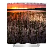 Lake Reeds At Sundown Shower Curtain