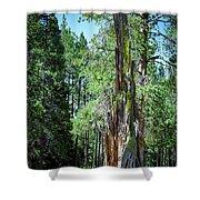 Lake Tahoe Tree Shower Curtain