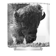 Lamar Valley Bison Black And White Shower Curtain