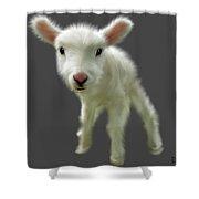 Lamb Chop Shower Curtain