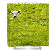 Lamb In A Dip Shower Curtain