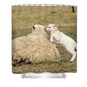 Lamb Jumping On Mom Shower Curtain