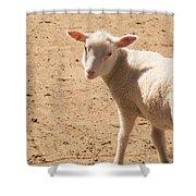 Lamb Looking Cute. Shower Curtain