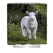 Lamb On The Isle Of Skye Shower Curtain