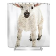 Lamb Standing Shower Curtain