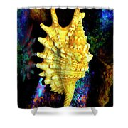 Lambis Digitata Seashell Shower Curtain